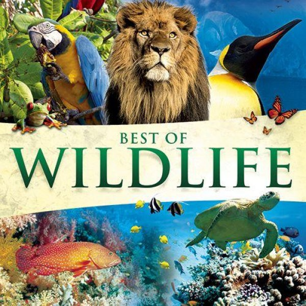 CD Best of Wildlife