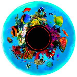 Magnetic Effect Wheel - Tropical Fish